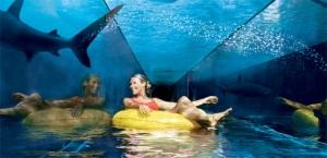Aquarium in PAlm Jumeirah