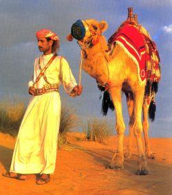 Sightseeing tours in Dubai